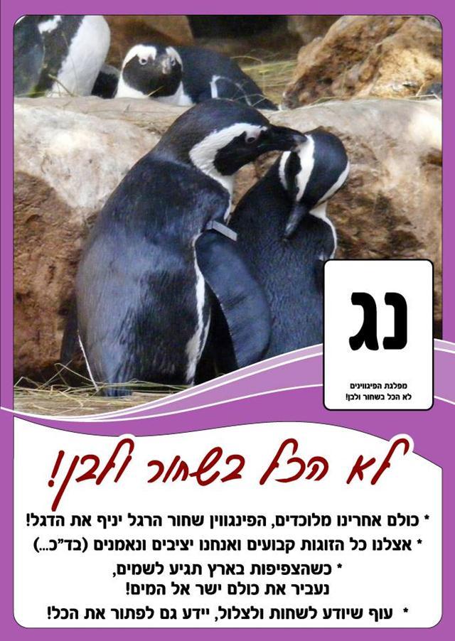 """(צילום: גן חיות תנ""""כי ירושלים) (צילום: גן חיות תנ"""