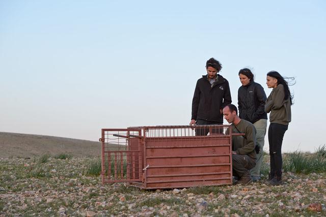 """צוות ביה""""ח לחיות בר, רוני אליאס (ימין), ד""""ר נילי אנגליסטר (מרכז), שמוליק לנדאו והפקח עדן אוליאל (שמאל) (צילום: לירון סמואלס) (צילום: לירון סמואלס)"""