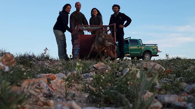 (צילום: רועי עידן) (צילום: רועי עידן)