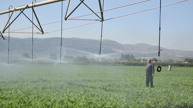 שדות בצפון. השקיה בשנת בצורת (צילום: אביהו שפירא) (צילום: אביהו שפירא)
