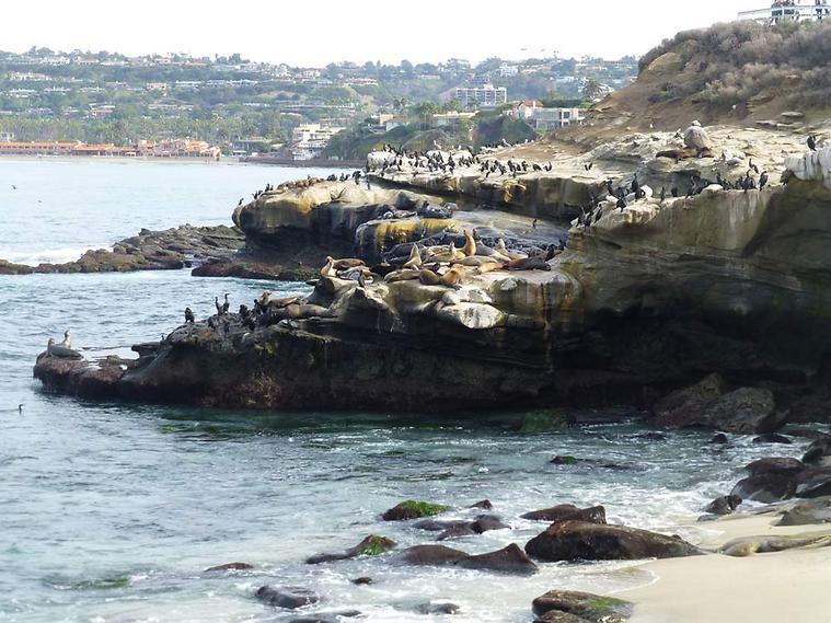 """אריות ים משתזפים ב""""לה הויה"""" (צילום: סיגלית בר)"""
