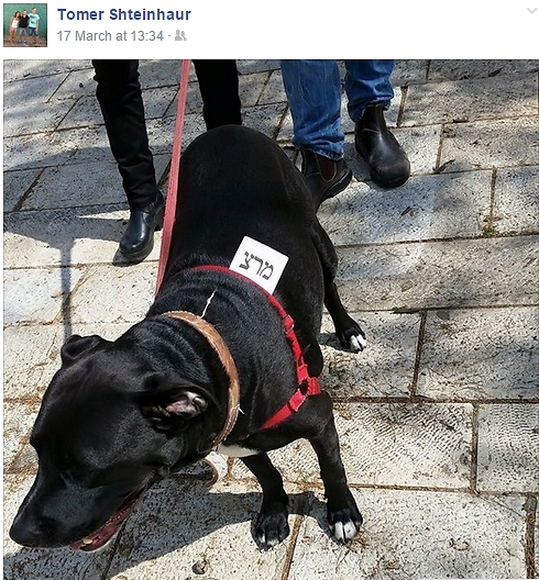 גם הכלב הצביע מרצ. מתוך סטטוס בפייסבוק של שטיינהאור ביום הבחירות (צילום: מהפייסבוק ) (צילום: מהפייסבוק )