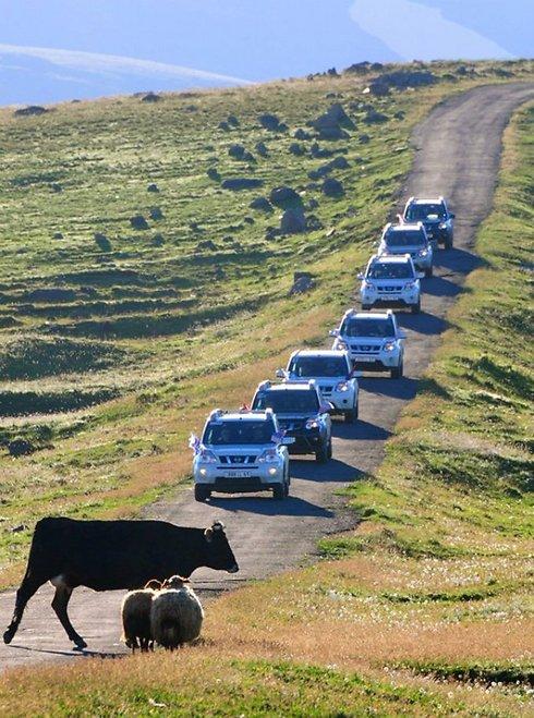 """""""נדמה לי שראיתי פרה מחייכת אלי"""", מיכל ירקוני (צילום: איה בן עזרי)"""