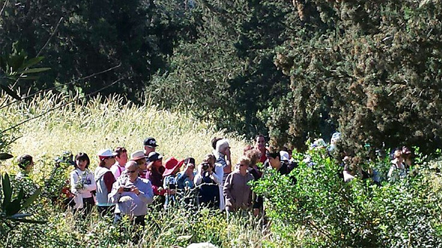 Walking in the Ben Shemen forest (Photo: JNF)