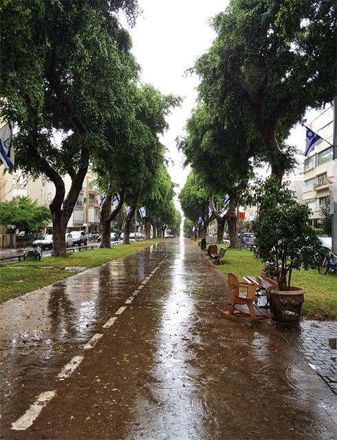 Rain on Tel Aviv's Ben Zion Boulevard (Photo: Shahar Yalov) (Photo: Shahar Yalov)