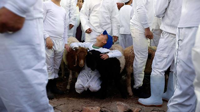 Samaritan Passover sacrifice at Mt. Gerizim (Photo: EPA)