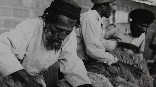 גז הצאן (צילום: ז'אק רום) (צילום: ז'אק רום)