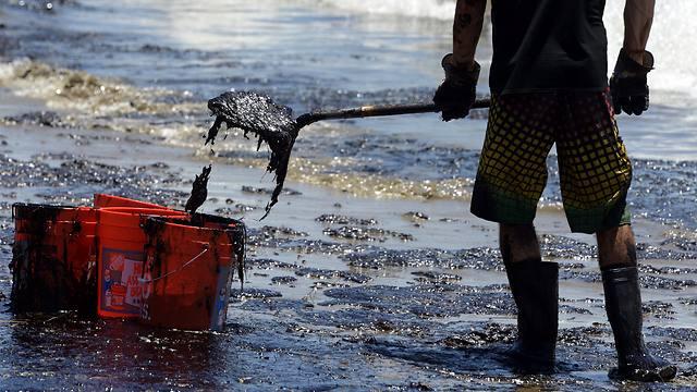 מאמצי הניקיון בחופי סנטה ברברה (צילום: EPA)