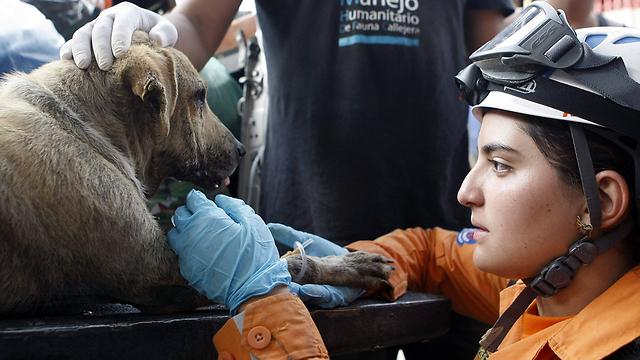 כלב נוסף שניצל ממפולת הבוץ (צילום: EPA) (צילום: EPA)