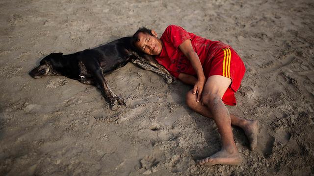 גם בעלי החיים באים לחוף כדי להירגע (צילום: AP)