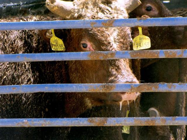 (צילום: צילום: אנונימוס לזכויות בעלי חיים)