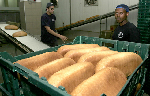 לחם אחיד (צילום: שאול גולן)