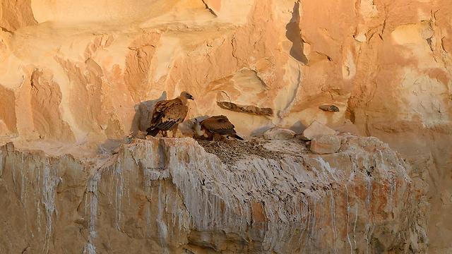(צילום: ערן היימס, רשות הטבע והגנים)