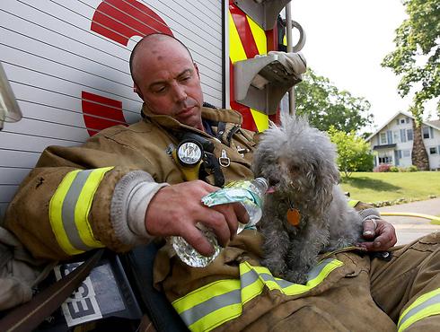 הכבאי ג'ון פוסקו ממנצ'סטר משקה במים כלב שחולץ משריפה בבניין בעיר (צילום: AP) (צילום: AP)
