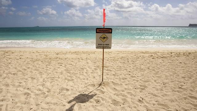 גם בחוף הטוב ביותר יש מדוזות (צילום: AP) (צילום: AP)