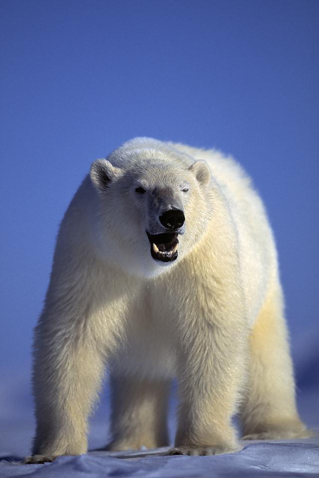 מזג האוויר מקשה על הצילום והיציאה לים. הסיכוי לפגוש את דובי הקוטב פוחת עם הזמן. צילום ארכיון (צילום: עמוס נחום biganimals.com) (צילום: עמוס נחום biganimals.com)