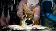צילום: אנונימוס זכויות בעלי חיים