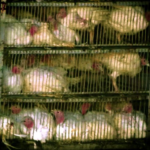 (צילום: אנונימוס זכויות בעלי חיים) (צילום: אנונימוס זכויות בעלי חיים)