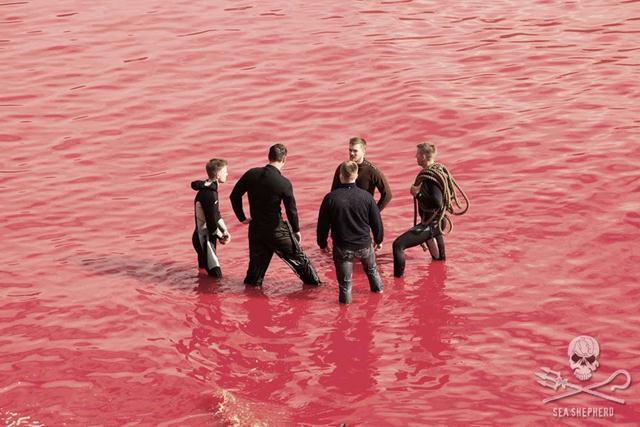 (צילום: seashepherd.org) (צילום: seashepherd.org)