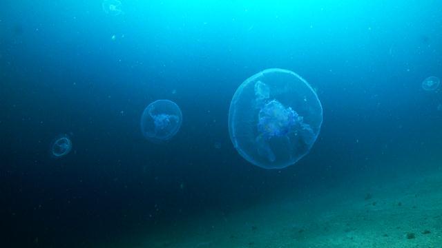 אורליה כחולה (צילום: צביקה (זיגי) לבנת) (צילום: צביקה (זיגי) לבנת)