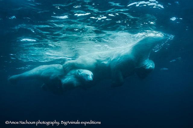 (צילום: עמוס נחום  BigAnimals.com) (צילום: עמוס נחום  BigAnimals.com)
