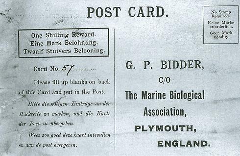 חלק מהמכתב שמצאה ווינקלר בבקבוק (צילום: AP / Marine Biological Association of the U.K) (צילום: AP / Marine Biological Association of the U.K)