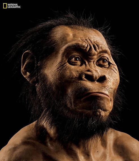 הגשר בין הקוף לאדם (צילום: AFP)