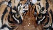 צילום: Chelsea Grubb, Devin Murph/Smithsonian's National Zoo