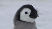 צילום: British Antarctic Survey