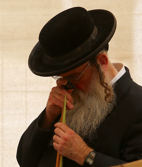 A completely straight lulav is worth its weight in gold...almost (Photo: Gil Yohanan) (Photo: Gil Yohanan)