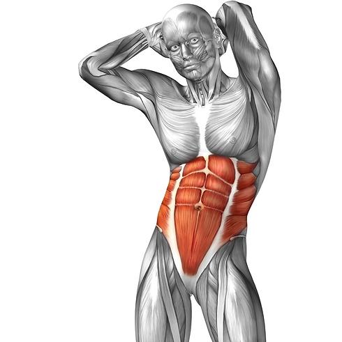חיזוק שרירי הליבה ירחיק הסיכון לפציעות וכאבי ברכיים (צילום: shutterstock) (צילום: shutterstock)