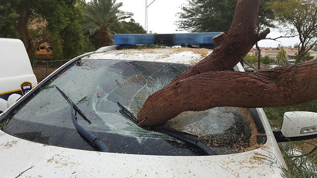 עץ שנפל על ניידת המשטרה באילת. אין נפגעים (צילום: חטיבת דובר המשטרה) (צילום: חטיבת דובר המשטרה)