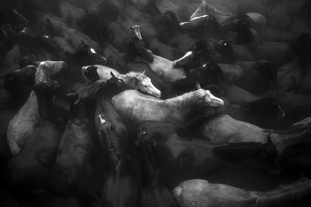 ציון לשבח (Daniel Rodrigues, פורטוגל). בצפון ספרד מתקיים מנהג עתיק להחלפת פרסות וחיתוך זנב סוסי בר החיים בהרים. המסורת הפכה לפסטיבל בינלאומי באחד הכפרים. צילום: Daniel Rodrigues   Siena International Photo Awards (צילום: Siena International Photo Awards)