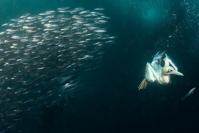 (צילום: נועם קורטלר / Festival Mondial de l'Image Sous-Marine) (צילום: נועם קורטלר / Festival Mondial de l'Image Sous-Marine)