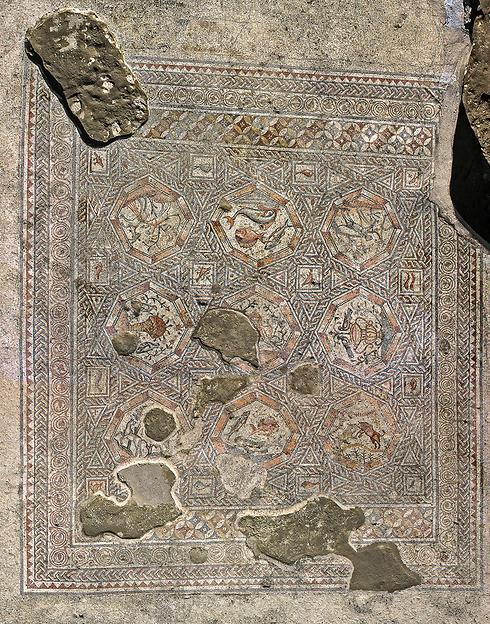 פסיפס שהתגלה בלוד (צילום: רשות העתיקות) (צילום: רשות העתיקות)