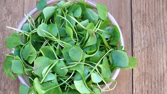 עלים ירוקים מכילים הכי הרבה מגנזיום (צילום: shutterstock) (צילום: shutterstock)