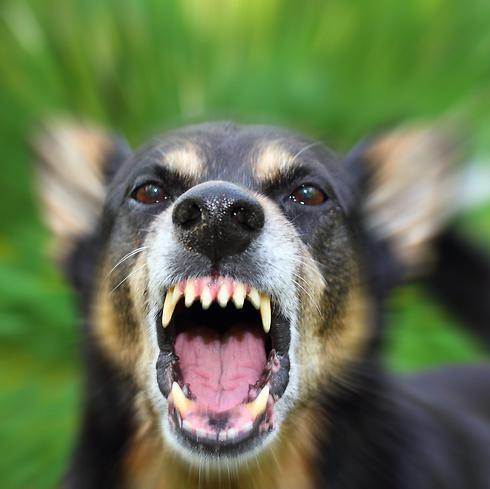 הכלב התגורר בתקופה האחרונה אצל שלוש משפחות בעיר. אילוסטרציה (צילום: Shutterstock) (צילום: Shutterstock)