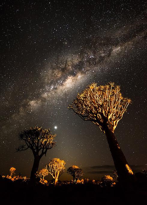 Quivertree trees under the Milky Way, Namibia (Photo: Erez Marom)