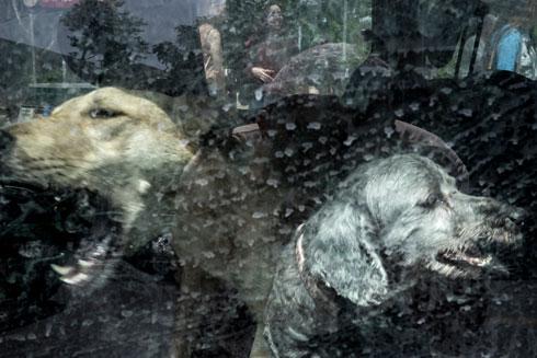 מתוך התערוכה: כלבים בתל אביב (צילום: גבי בן אברהם)