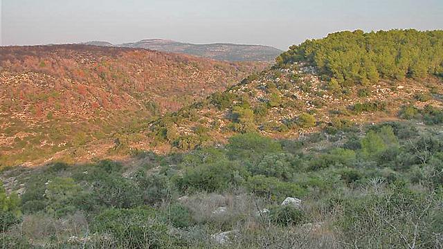 הכרמל (צילום: יאיר זיידנר)
