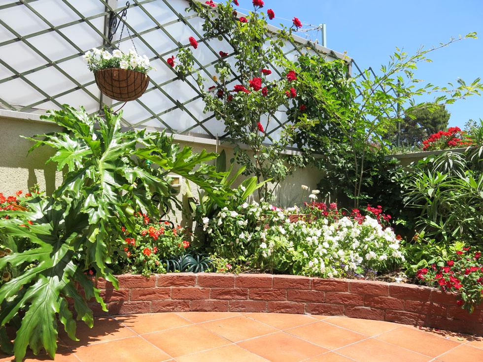 """ורד מטפס """"דון-ז'ואן"""" מהווה נקודת מוקד בגינת הגג, ומפיץ ריח נעים לעת ערביים (צילום: באדיבות רודה גינון גגות)"""