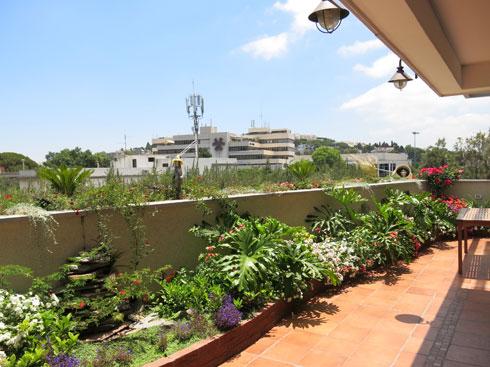 ערוגה מגוננת לאורך כל המרפסת (צילום: באדיבות רודה גינון גגות)