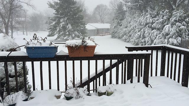 לבן בניו ג'רזי (צילום: ערן פריגת ) (צילום: ערן פריגת )