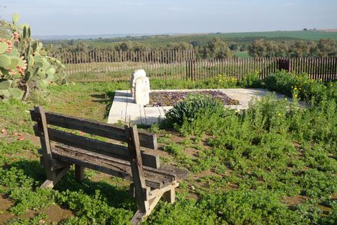 ספסל העץ ששרון בנה ועליו ישב, מול קברה של אשתו. הלכה לעולמה ב-2000 (צילום: מיכאל יעקובסון)