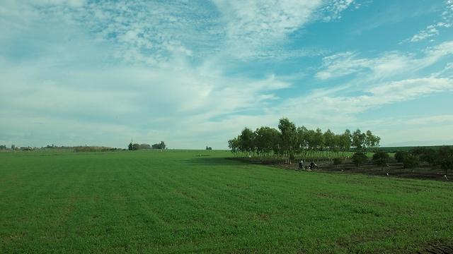 Israeli Agriculture (Photo: Laim Shemesh