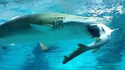 צילום: gettyimages / COEX Aquarium