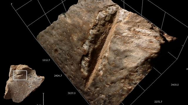 """(צילום: ד""""ר רות בלסקו, המכון הלאומי לחקר האבולוציה של האדם, ספרד) (צילום: ד"""