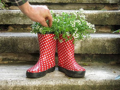 שותלים פרחי ירק (צילום: באדיבות רודה גינון)