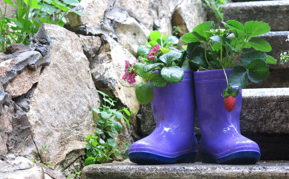 אפשר לשתול תותים, סלסלי כסף, אמנון ותמר, רקפות, גזר גינה או כל צמח קטן (צילום: גלית כהן רודה)