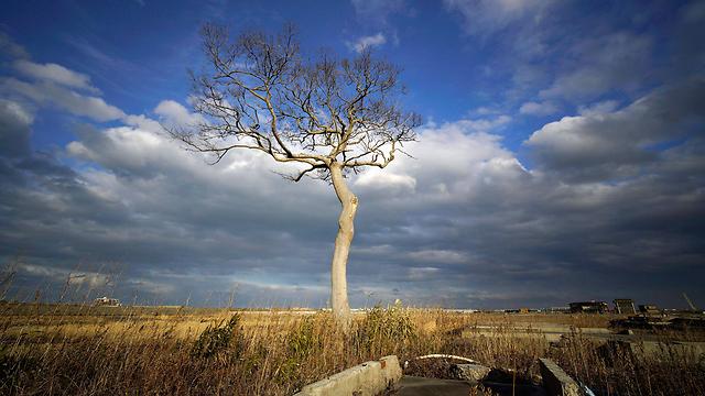 העץ היחיד ששרד (צילום: EPA) (צילום: EPA)